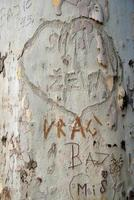 mensaje en el árbol de la corteza foto