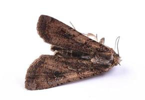 close-up vlinder