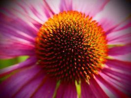 pink close up photo
