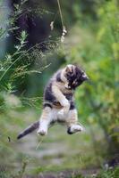 schattige kat in grappige sprong foto