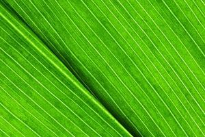 Leaf Close Up. photo