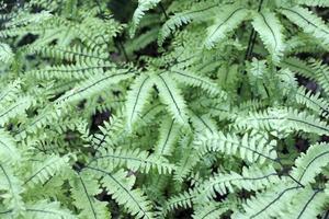 Ferns Close Up