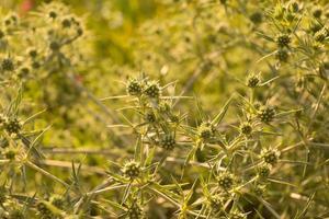 Tumbleweed close-up photo
