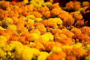 close up marigold photo
