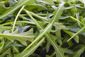 Rucola close up photo