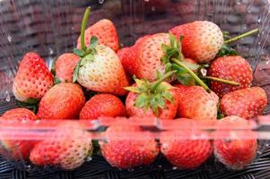 Close up strawberry packging