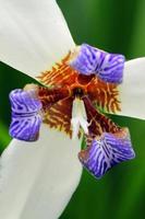 flor de primer plano foto