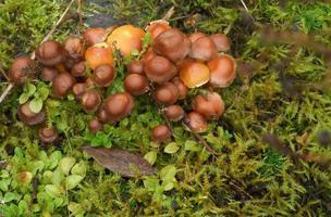 close-up de cogumelos