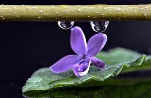Close Up Lilac photo