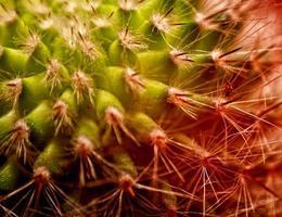 Cactus- close up