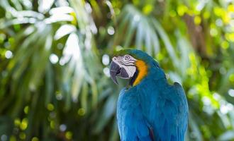 Macaw Close Up