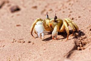 Close-up crab