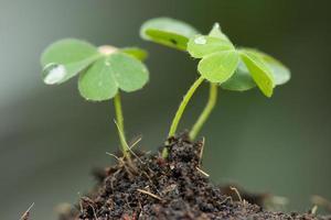 planta joven foto