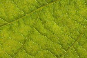 extremo da folha de perto