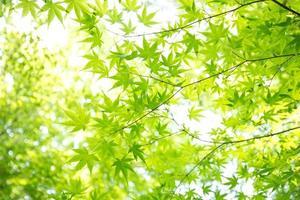 Fresh green leaves photo
