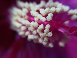 primer plano de flor morada