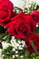 rosas da holanda close-up