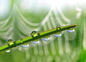 dew drop close up photo