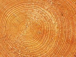 Close-up wooden texture