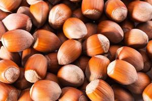 close up of hazelnut photo