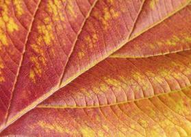 close-up autumn leaf photo