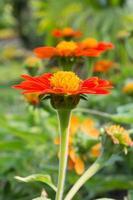 primer plano de flor roja foto