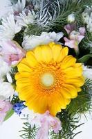 Yellow gerbera close up photo