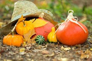 primer plano vegetal de otoño