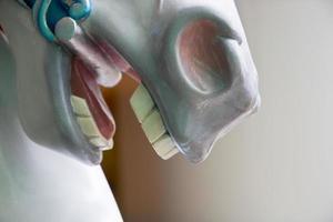 Primer plano de dientes de caballo. foto