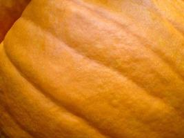 Pumpkin Close Up Background