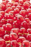 grosella roja, de cerca foto