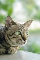 Cat with green eyes photo