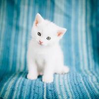 Small white kitty photo
