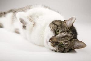 gato acostado foto