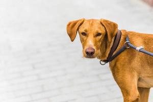 dog on a leash photo