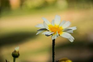 flor blanca, sola flor