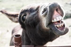 Donkey photo