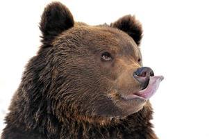 oso en bosque de invierno foto