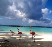 flamingos bonitos em uma praia paradisíaca