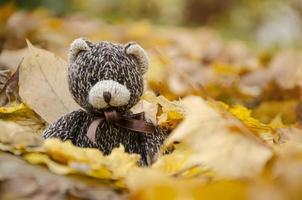 TEDDY BEAR brown colour sitting on autumn leaves.