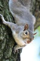 squirrel up high