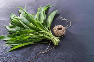 bear's garlic