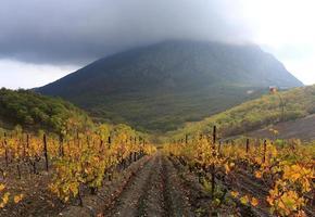 Crimea, Bear Mountain, Resort photo
