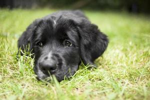 Cute puppy dog photo