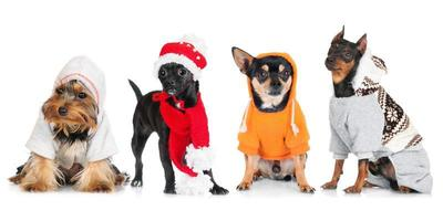group of dressed dogs