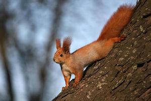 esquilo na árvore à luz do sol
