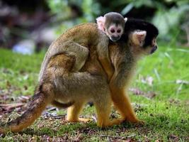 mono ardilla con niño