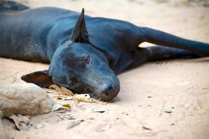 dog lying on the road photo