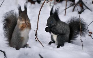two squirrel