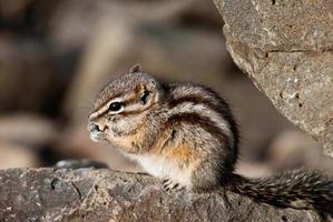 scoiattolo che mangia un seme